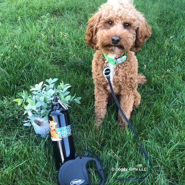 Kona wearing Dog Tag Art Got Treats Dog Tag and Coastal Pet Pro Waterproof Collar and Power Walker Retractable Leash