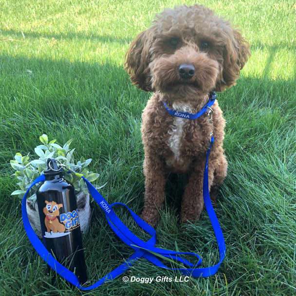 Kona wearing Coastal Pet personalized plastic buckle dog collar and personalized nylon leash