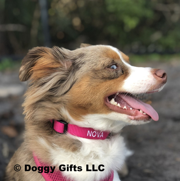 Nova having fun wearing her Coastal Pet Products Adjustable Nylon Dog Collar With Plastic Buckle Personalized