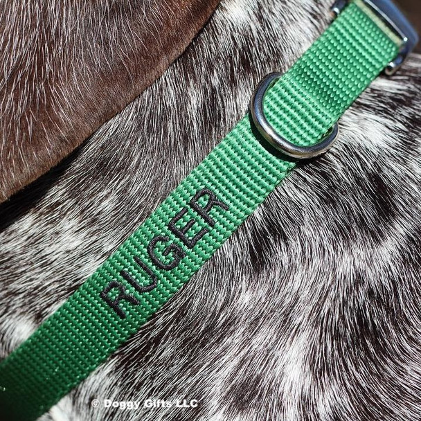 Ruger wearing Coastal Pet Metal Buckle Nylon Dog Collar Personalized HUN Hunter Green