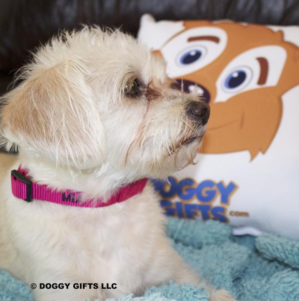 Sweet Mia wears her Coastal Pet Martingale Adjustable Nylon Dog Collar Personalized (6407E) Pink Flamingo PKF