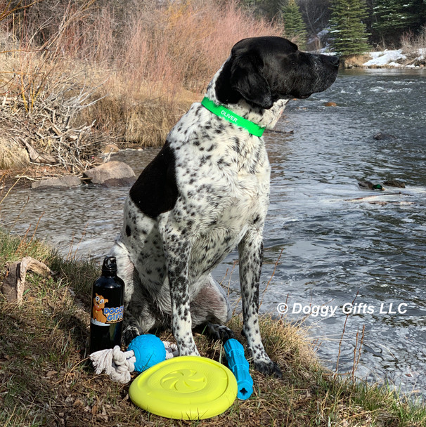 Oliver looks great in his Coastal Pet Pro Waterproof Standard Dog Collar Personalized (4611E) and playing with his Pro Fit Dog Toys