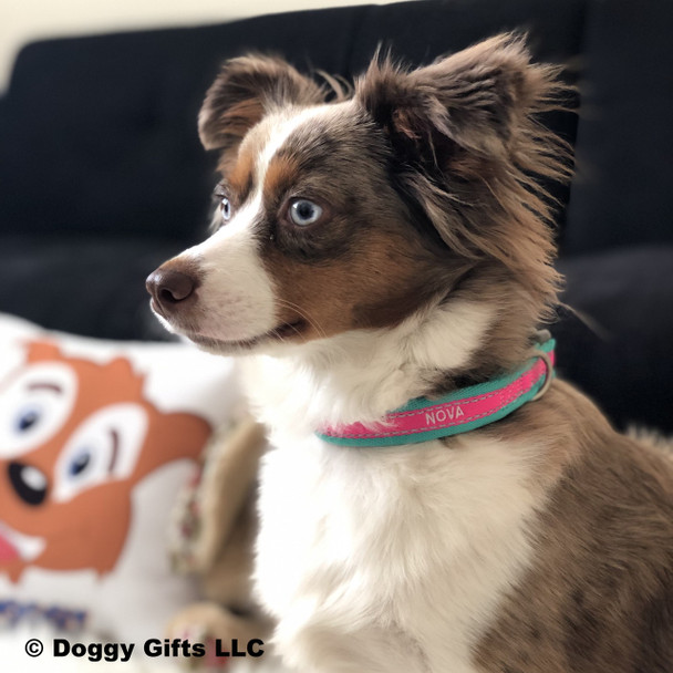 Coastal Pet Attire Pro Reflective Adjustable Dog Collar Personalized