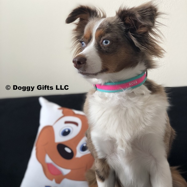 Nova loves her Coastal Pet Attire Pro Reflective Adjustable Dog Collar Personalized