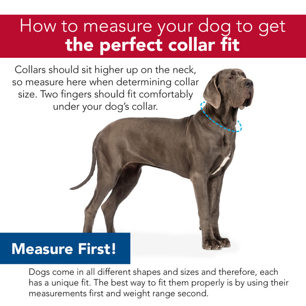 Measure your dog's neck for a perfect collar fit Pro Reflective dog collar personalized