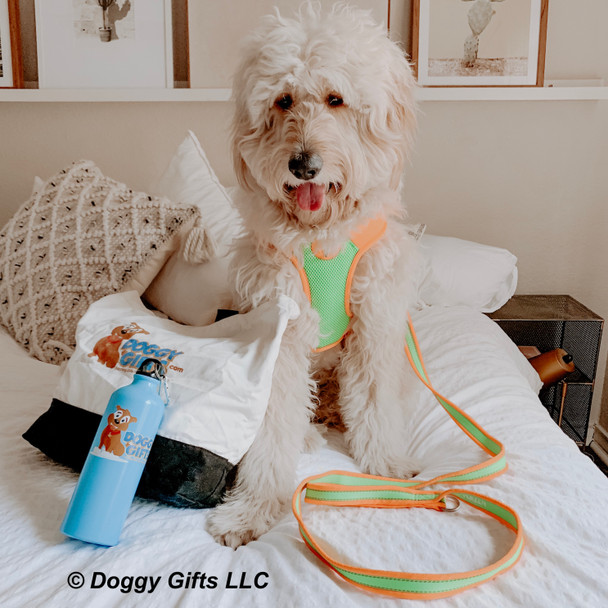 hamiltonnharper looks handsome in his Coastal Pet Pro Reflective harness and leash
