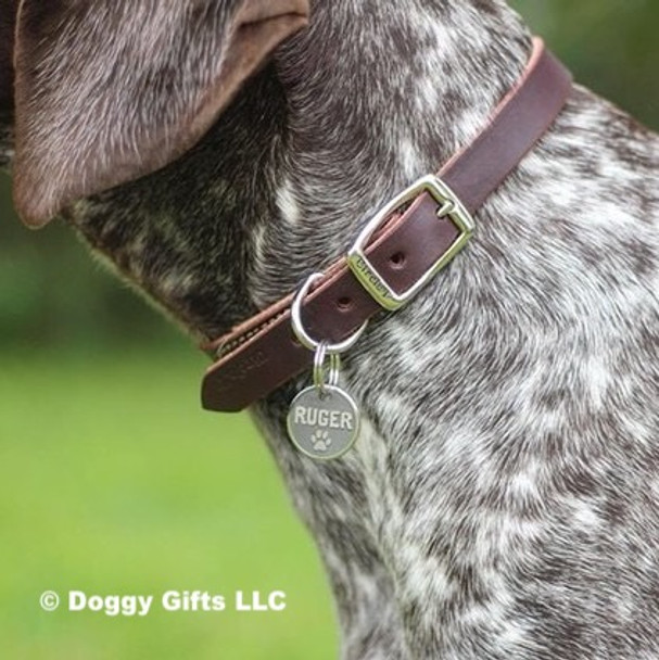 Close up of Circle T Leather by Coastal Pet Latigo Leather Town Dog Collar (2103) on Ruger