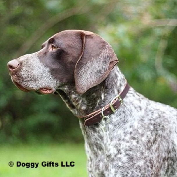 Ruger wearing his Circle T Leather by Coastal Pet Latigo Leather Town Dog Collar (2103)