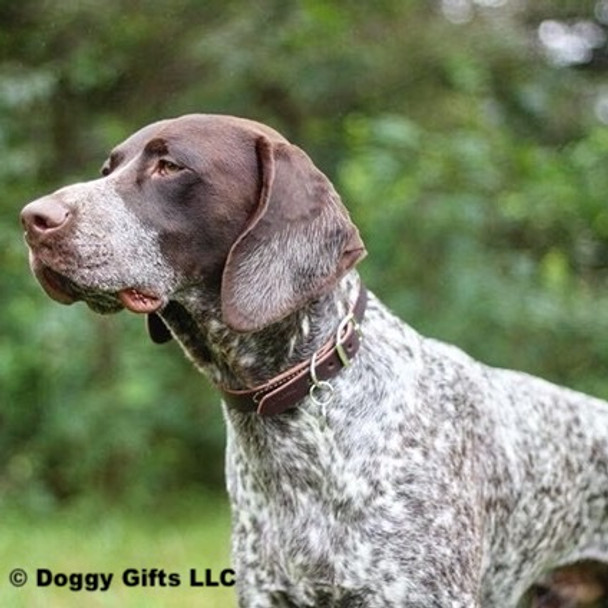 Ruger models his Circle T Leather by Coastal Pet Latigo Leather Town Dog Collar (2103)