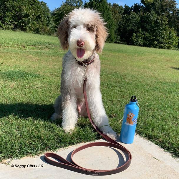 Reggie wearing Coastal Pet Circle T Leather Leash and Round Collar