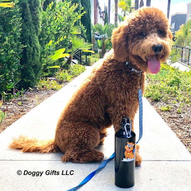 Charlie Dood wearing Coastal Pet Lazer Bright Collar and leash