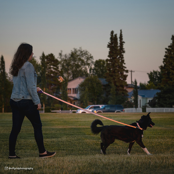 Coastal Pet Lazer Brite Reflective Open Design Adjustable Dog Leash Orange Abstract Rings On Dog