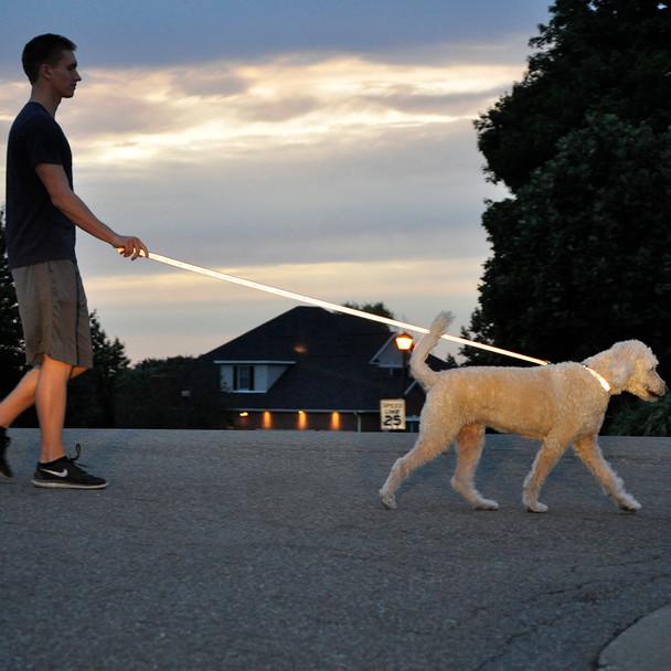 Coastal Pet Lazer Brite Reflective Open Design Adjustable Dog Leash Reflecting On Dog