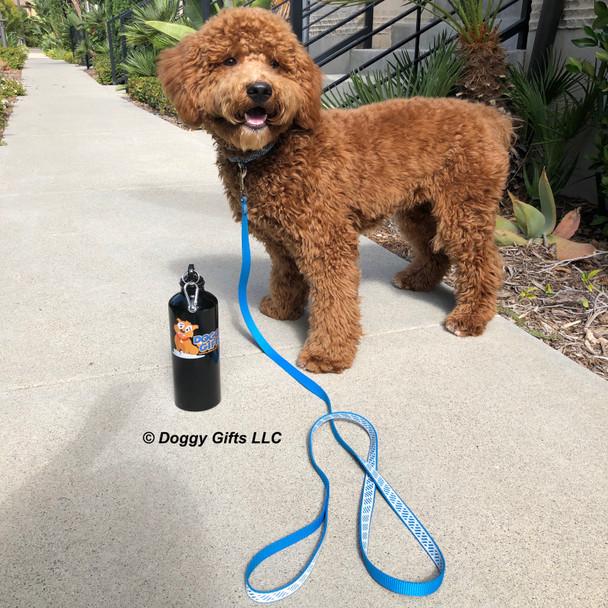 Charlie Dood wearing Coastal Pet Lazer Bright Leash and collar
