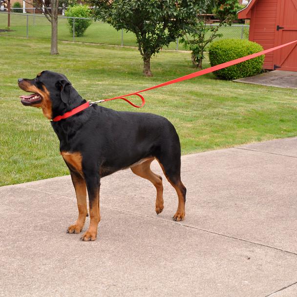 Coastal Pet Loops 2 Double Handle Nylon Dog Leash Red Walking On Dog