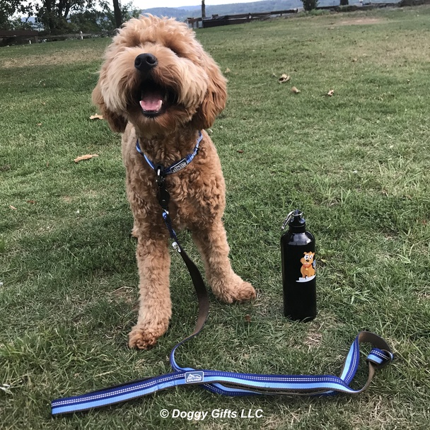 Sammy wearing K9 Explorer Reflective Dog Leash