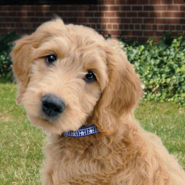 Coastal Pet Nylon Jeweled Dog Collar