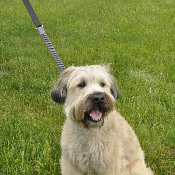 Coastal Pet Bungee Dog Leash (00924BCG04)