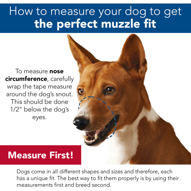 How to measure your dog's snout for a muzzle size
