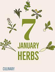 Seven Must-eat January Herbs (Nanakusa)