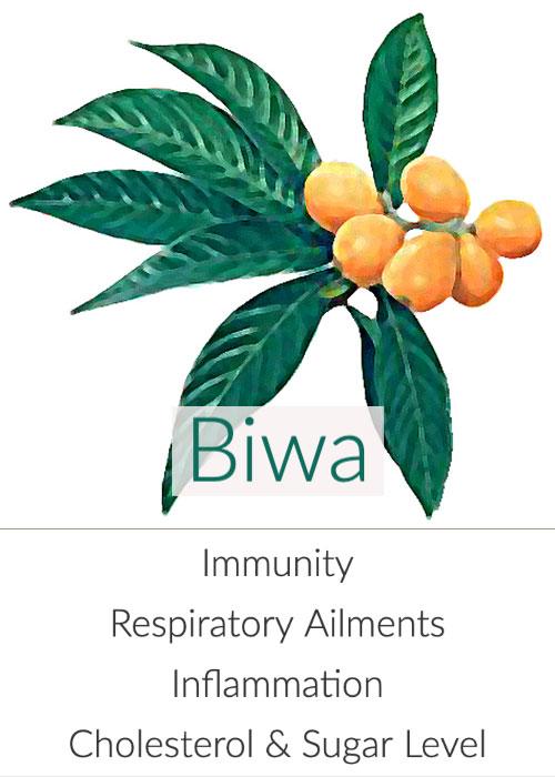 biwa-cha-501.jpg