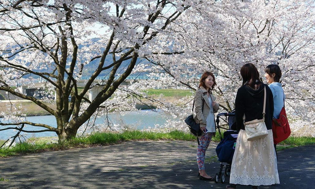 Three women talking under a cherry blossom tree
