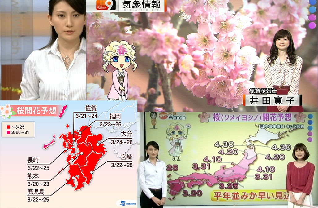reporters presenting forecast of the northward march of cherry blossoms front (sakura zensen)