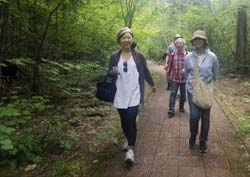 In Japan, people commonly go for health-boosting nature walks called forest bathing