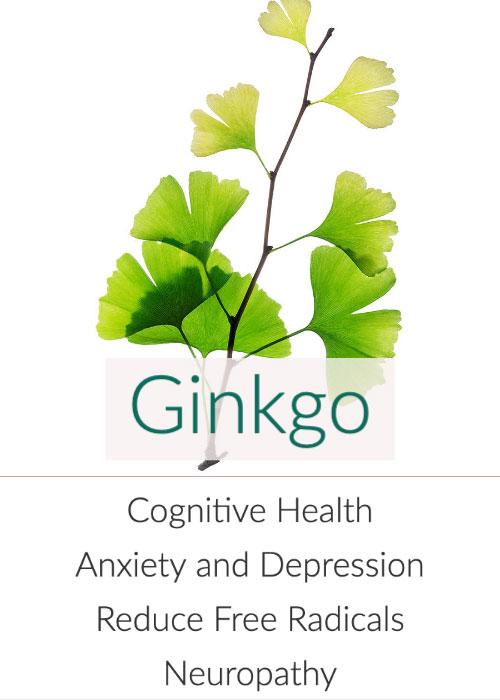 ginkgo-biloba-leaves-500.jpg