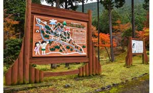 shinrin-yoku (forest bathing) initiative-- a national public health program to encourage people to take nature walks.