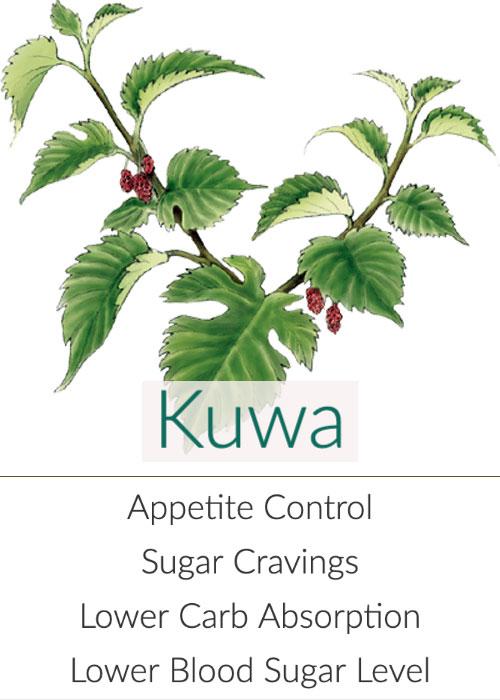 kuwa-mulberry-500.jpg