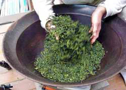 To make Kamairi green tea, fresh leaves are dried after harvesting at 300 °C