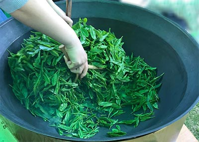 the tea maker keeps turning the leaves rapidly, observing the changes in color and texture.