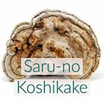 saru-no-koshikake-ganoderma-mushroom-150.jpg