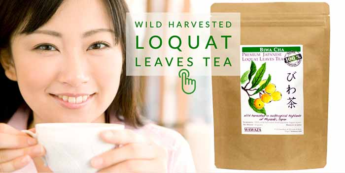 Pack of loquat leaves tea and woman drinking a cup