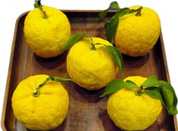highly aromatic Japanese citrus (Citrus junos) about the size of a tangerine and coy, zesty, aroma.