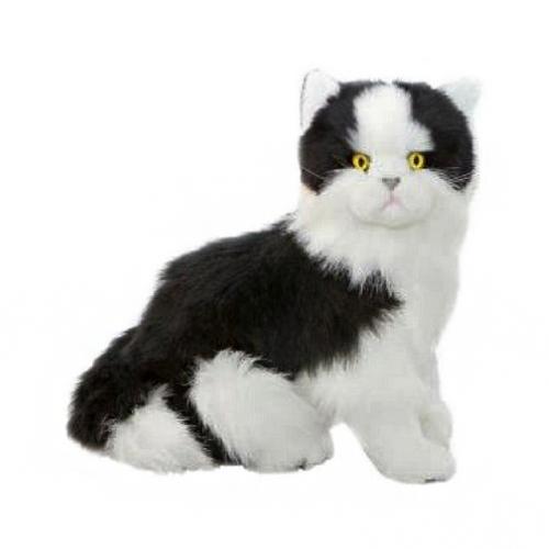 Bocchetta Angus Piebald Cat