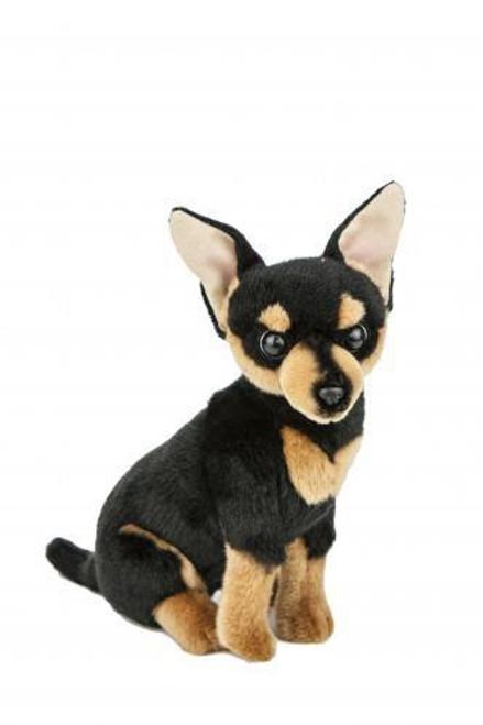 Bocchetta Taco Chihuahua