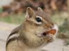 Wakefield Virginia Animal-Grade Shelled Redskin Peanuts