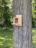Wakefield Premium Squirrel Houses Peanut Munch Box Feeder