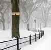 Wakefield Premium Bird Houses Horizontal Winter Roost Box