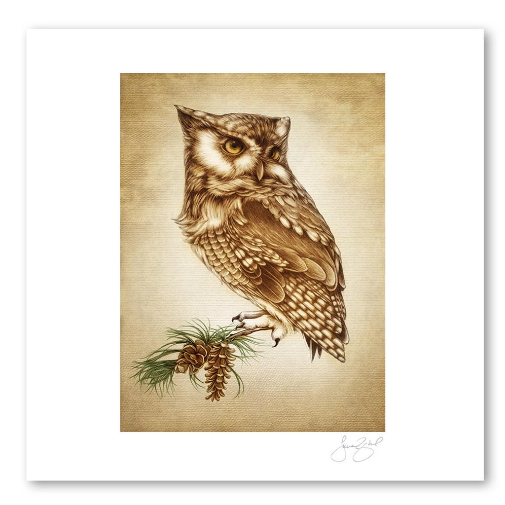 Prints : Screech Owl #1, 11X14 Unframed