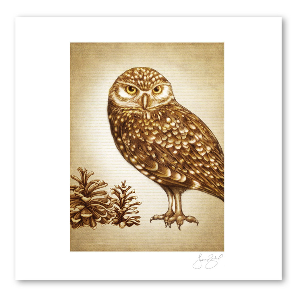 Prints : Burrowing Owl, 11X14 Unframed