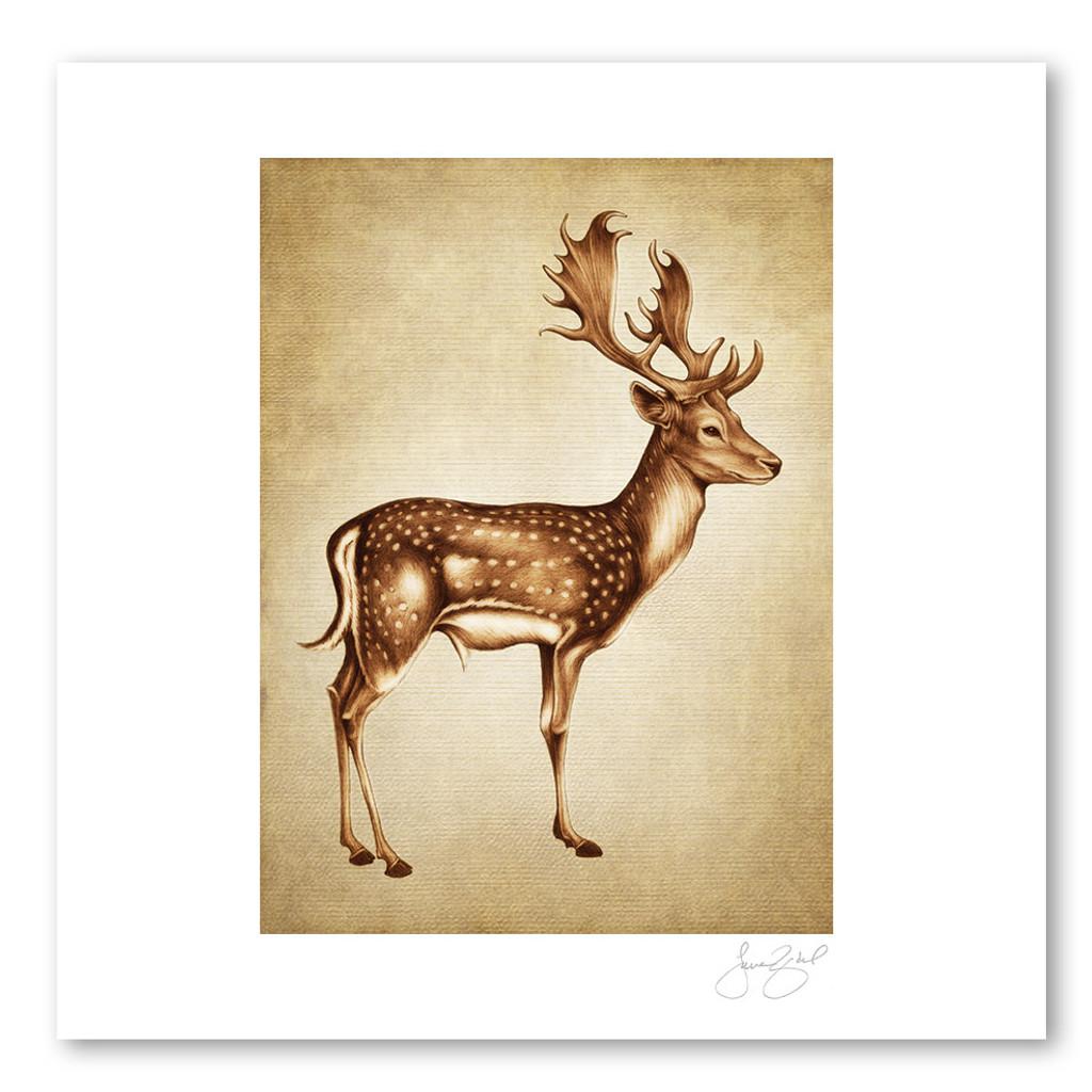 Prints : Fallow Buck, 11X14 Unframed
