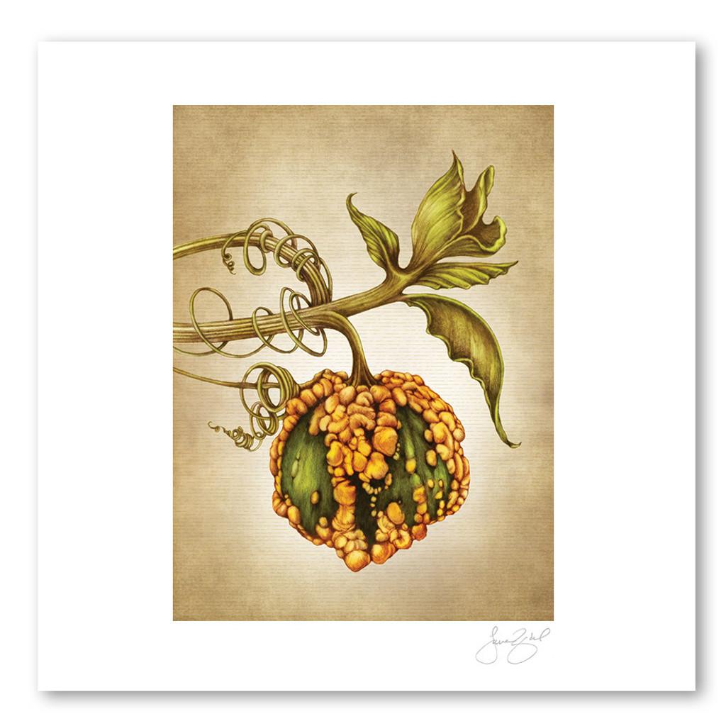 Prints : Warty Gourd, 11X14 Unframed