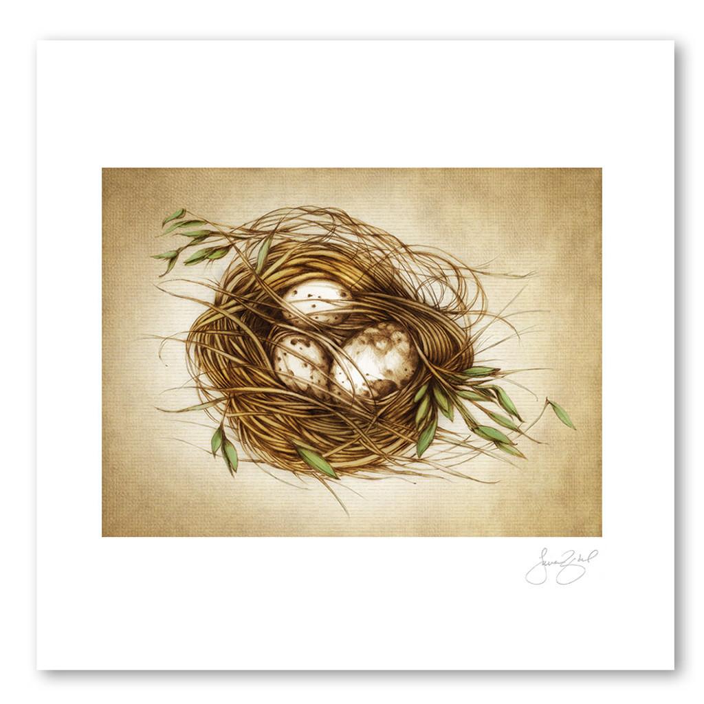Prints : Quail Nest, 11X14 Unframed