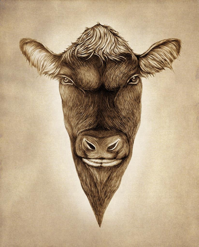 Prints : Angus Bull, 8X10 Unframed