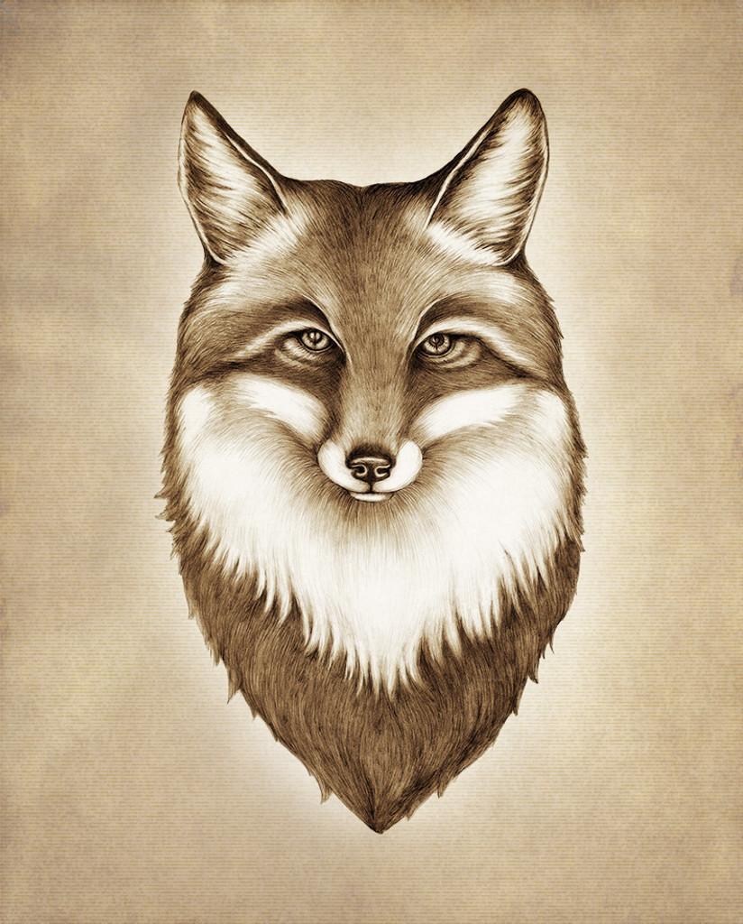 Prints : Fox Portrait, 8X10 Unframed