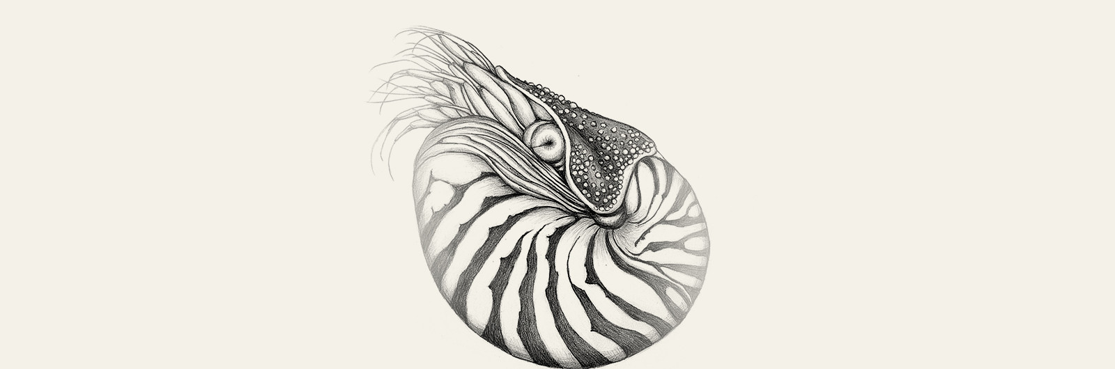 Shells Etc.