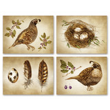 Note Cards: Quail